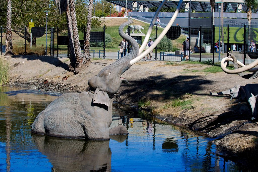 la brea tar pits elephants los angeles la