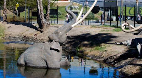 In the Sunken Place: La Brea Tar Pits and Museum