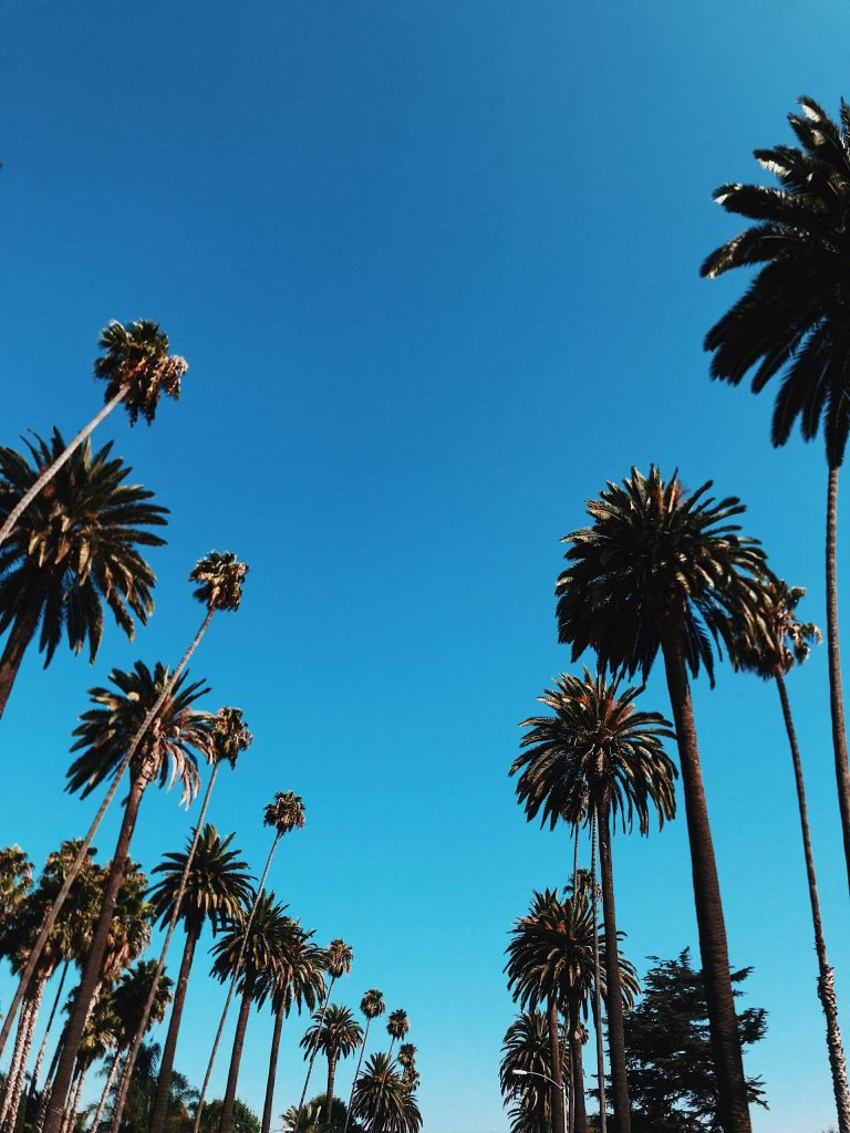 palm trees los angeles beverly hills