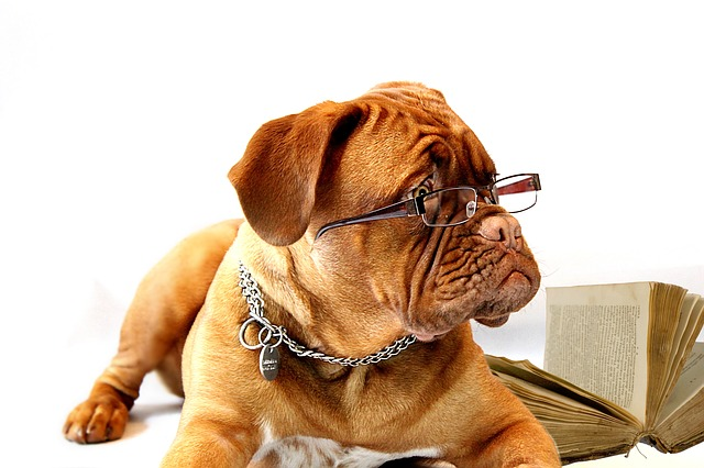 dog reading book with glasses