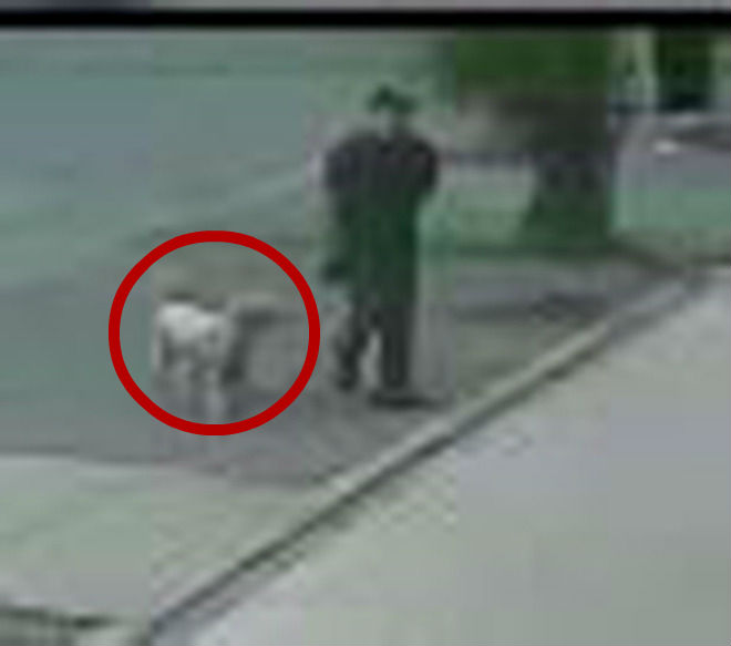 dog with man security footage