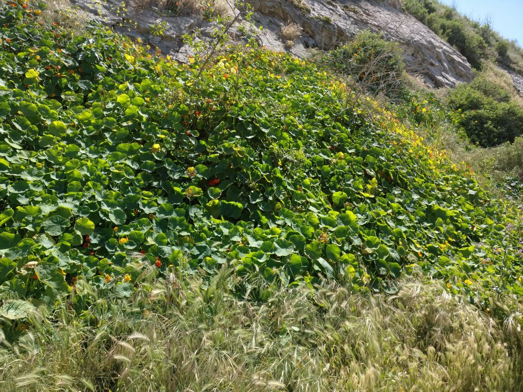 green malaga cove flowers