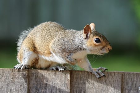 UCLA Students Help Baby Squirrel Jump Over Wall on BruinWalk