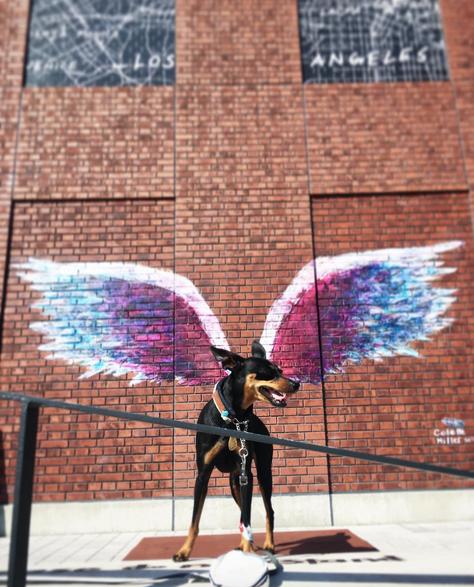 angel wings dog