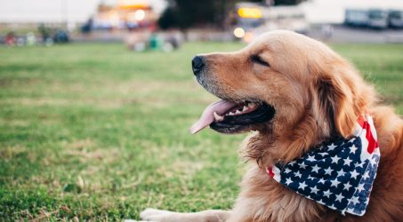 This 4th of July in LA, save a dog's life by taking care of it for the long weekend — Four Days for Life