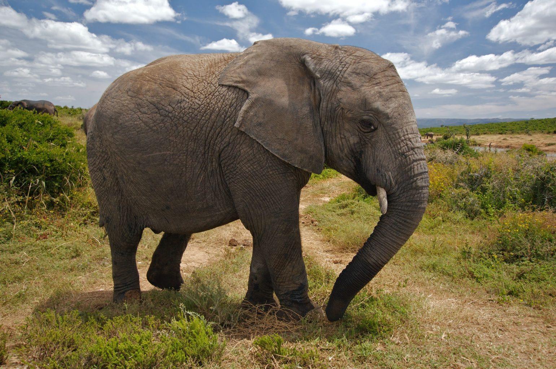 thailand elephant beautiful animal